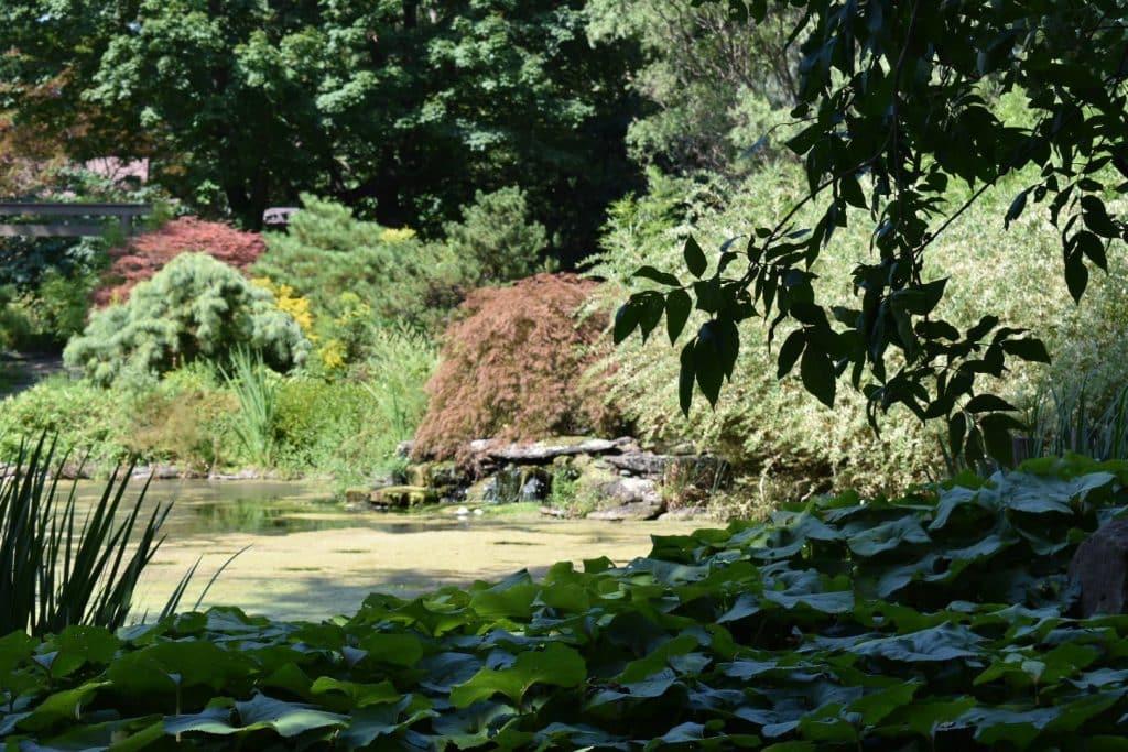 Rochester private Japanese garden