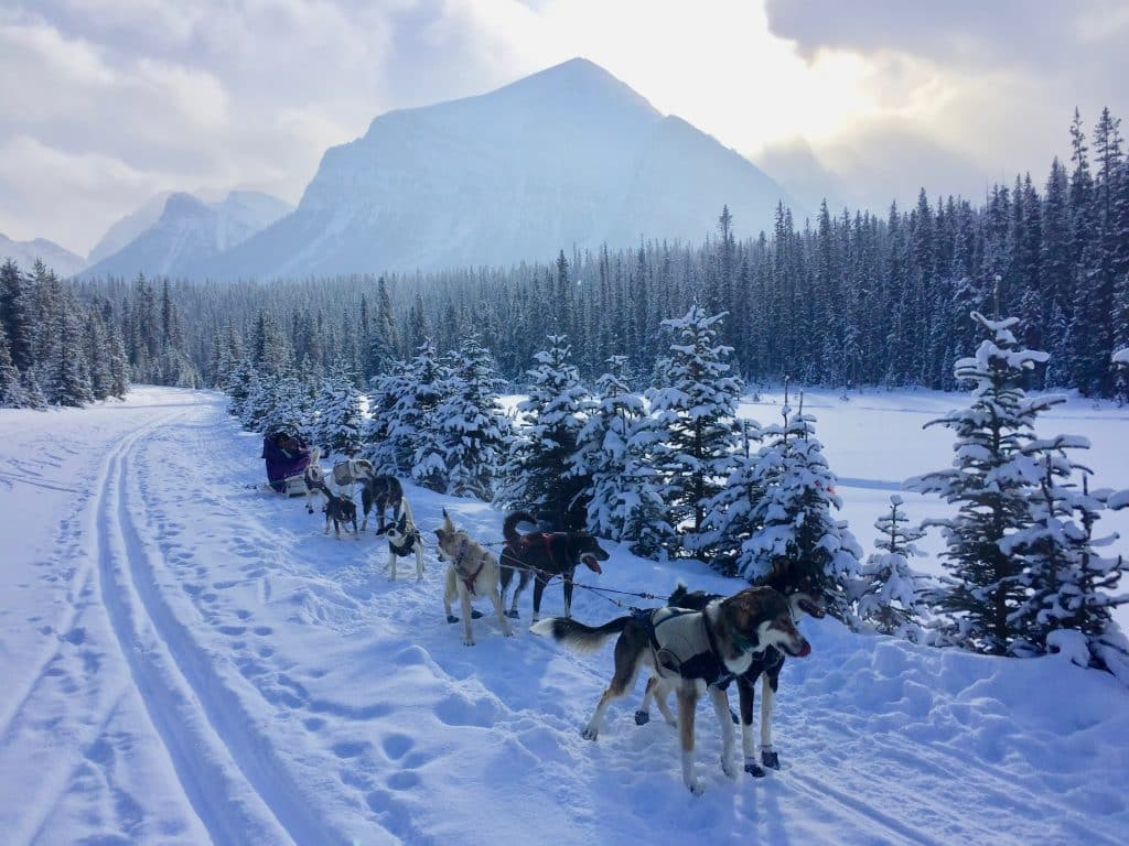 Dog sledding Lake Louise