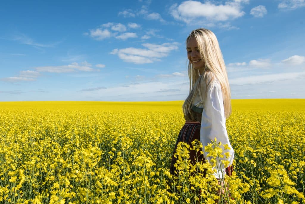 Beautiful flowers and gardens around the world: Canola Fields in Sweden