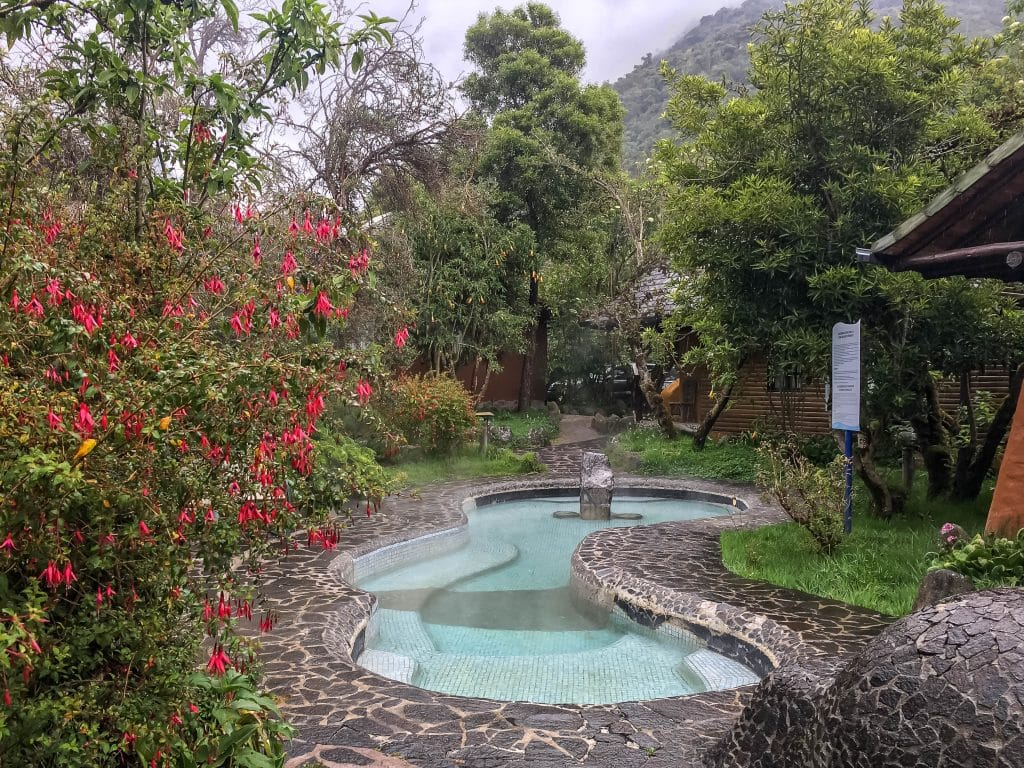 Beautiful flowers and gardens around the world: Beautiful Andres flowers in Ecuador