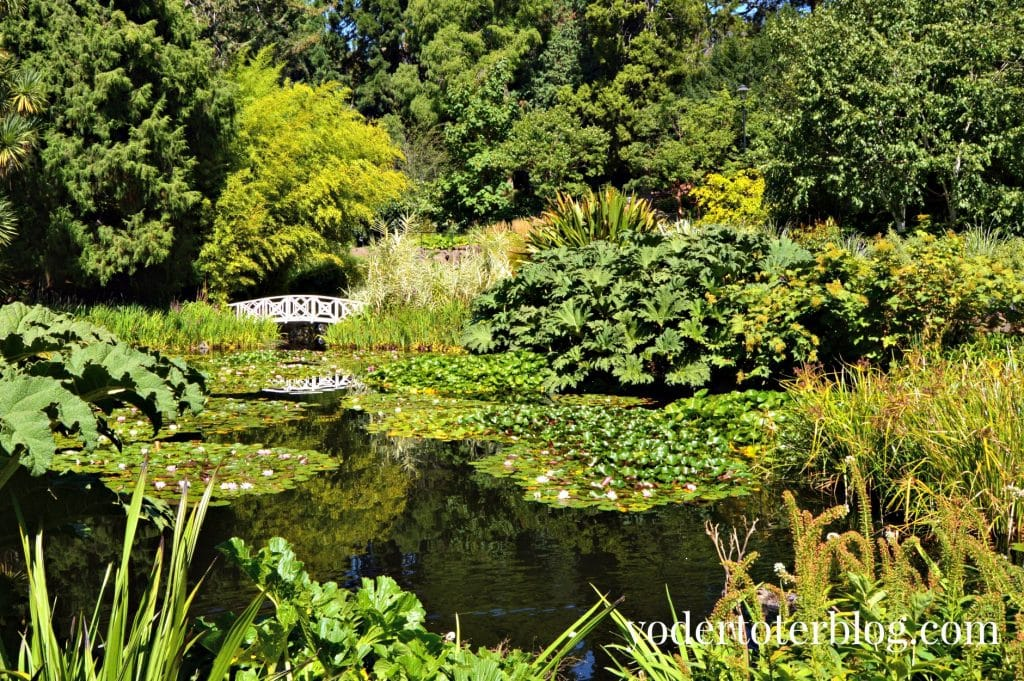 Beautiful flowers and gardens around the world: Royal Tasmanian Botanical Garden in Australia