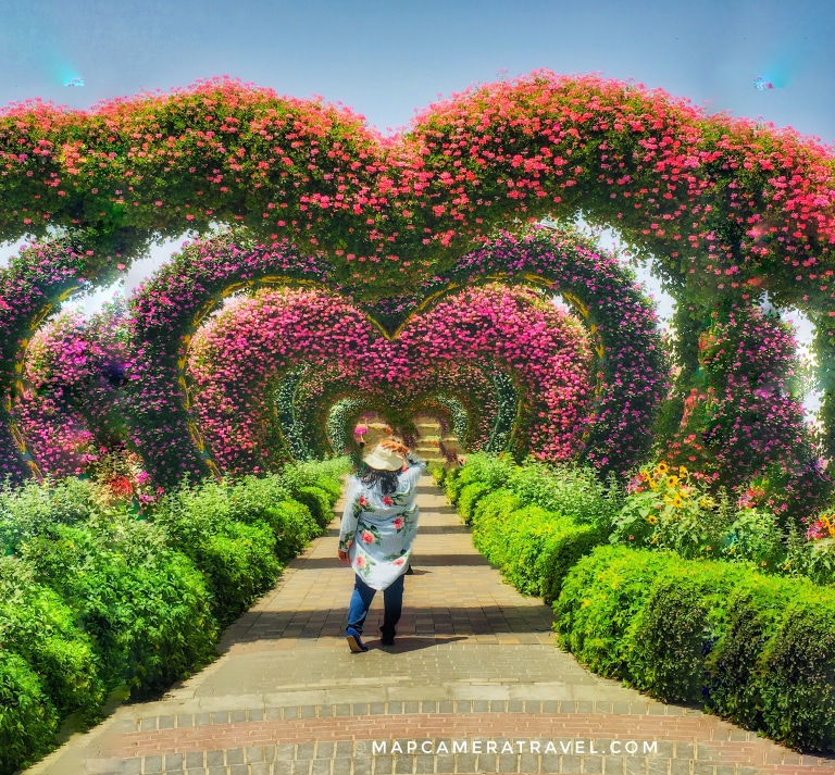 Beautiful flowers and gardens around the world: Dubai Miracle Garden