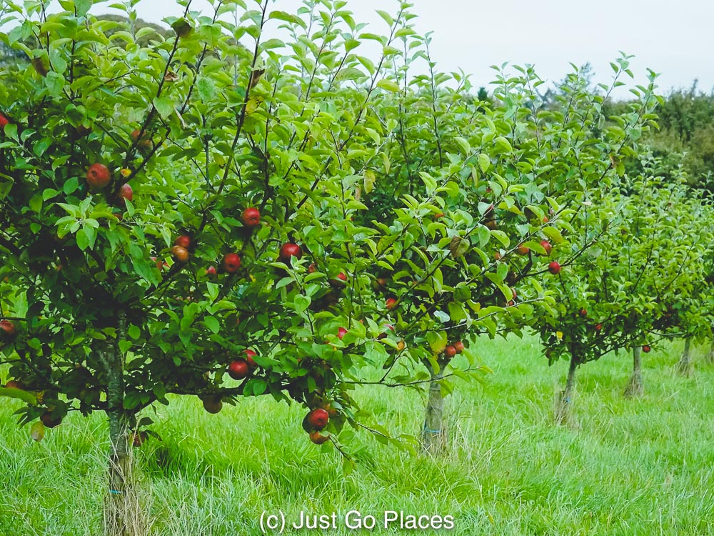 Beautiful flowers and gardens around the world: Ballymaloe Country House Apple Orchards in Cork, Ireland