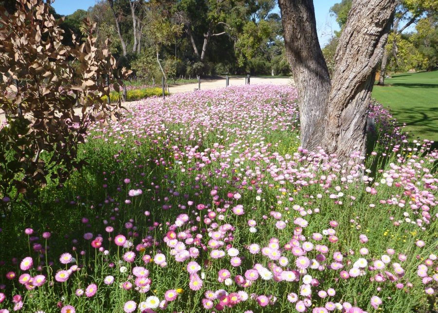 Beautiful flowers and gardens around the world: Kings Park Botanical Garden: Perth, Australia