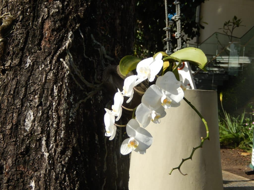 Beautiful flowers and gardens around the world:Orchids in Brazil Rio De Janeiro