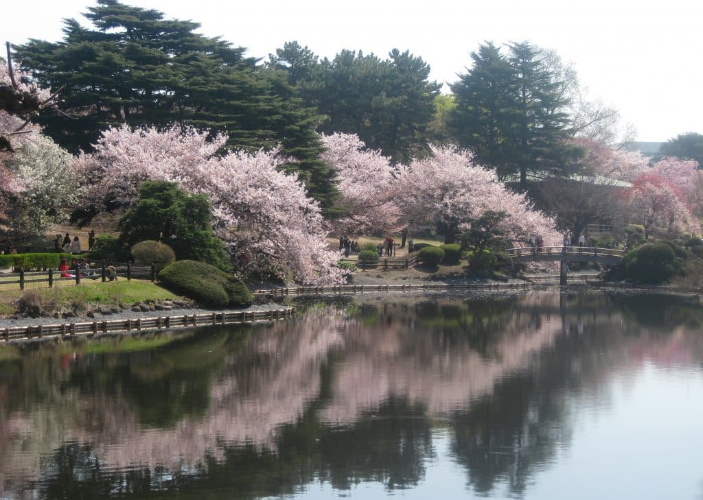 Beautiful flowers and gardens around the world: Shinjuku Gyoen National Garden Tokyo, Japan