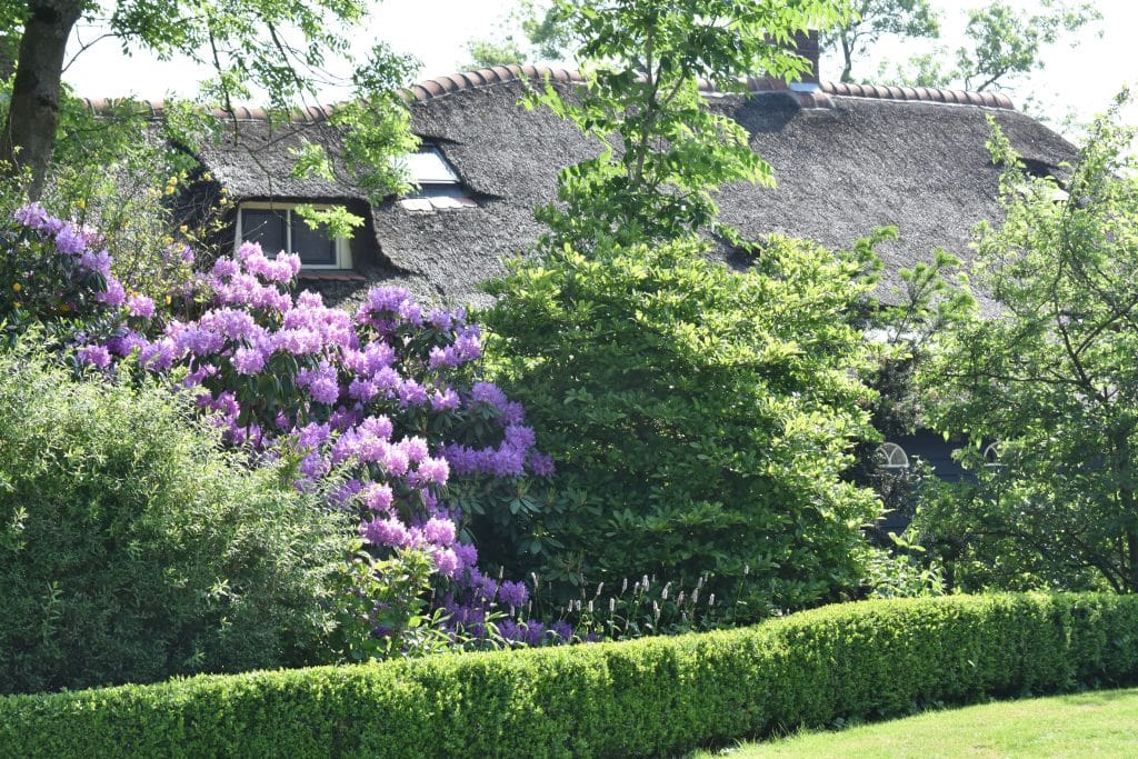 Giethoorn Netherlands Thatched home with purple flowers