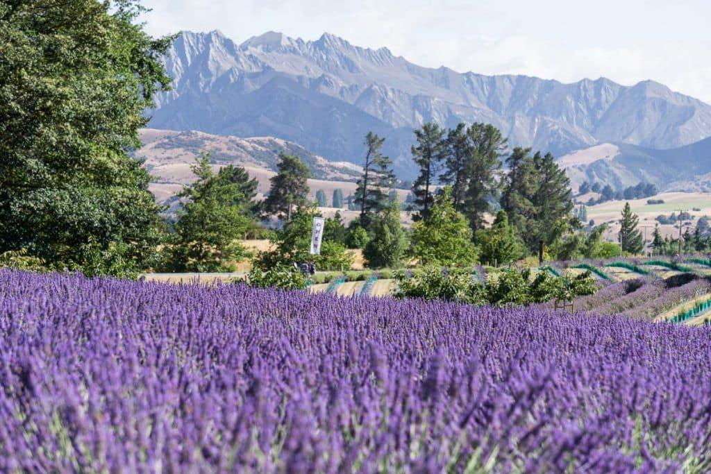 Famous gardens around the world; wanaka Farms New Zealand