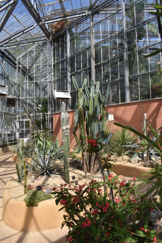 Plants in desert climate at the Botanical Gardens in Amsterdam