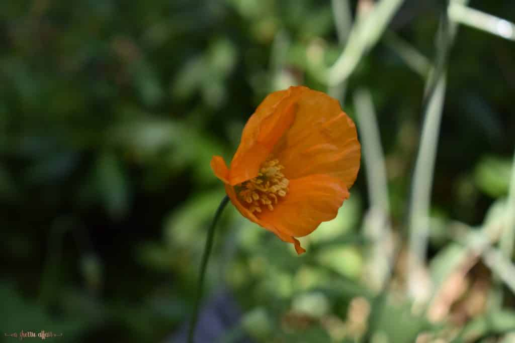 Single orange flower