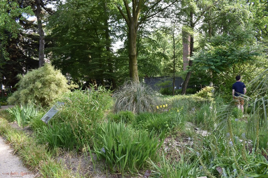 Pathway in gardens