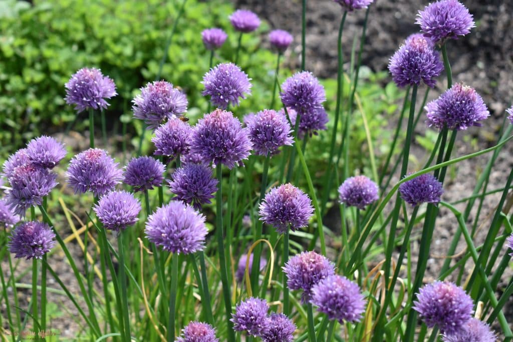 Purple flowers on our Photography Tour of the Botanical Gardens Amsterdam