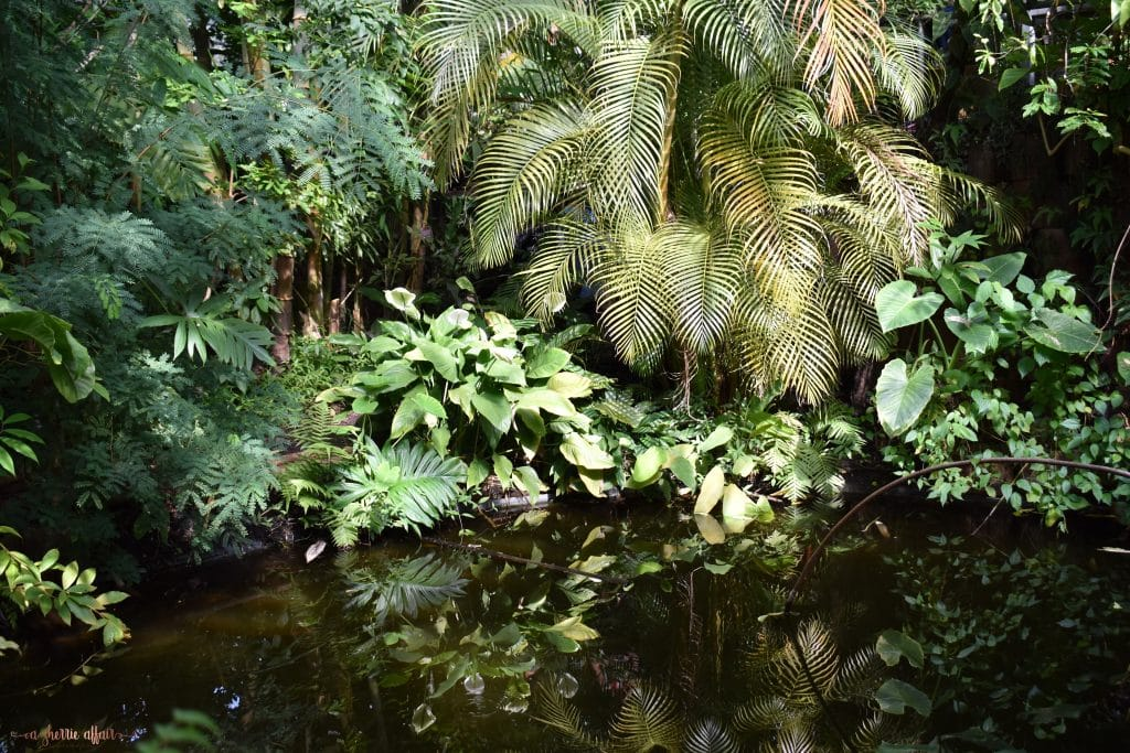 pond with green plants